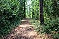 Suwannee River State Park Sandhill Trail 1.jpg