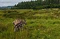 Swaziland (33621621286).jpg
