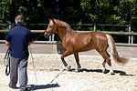 Swiss national stud farm Avenches-IMG 8514.jpg