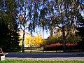 Szentes 2014-11-15, Erzsébet tér, nyírfák - panoramio.jpg