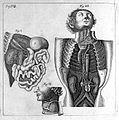 T. Bartholin, glandularum, glandulae... Wellcome L0007877.jpg