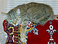 Tabby cat relaxing on back of couch (20 03 2011).jpg