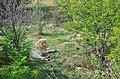 Taigan Park, Lev rests, Crimea, Russia.jpg