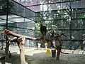 Taman Hewan Pematang Siantar (30).JPG