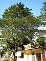 Taysan,Batangasjf9918 09.JPG
