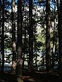 Tenaya Lake 2010 06.jpg