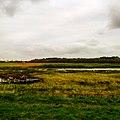 Texel - Duinen v2.jpg