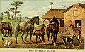 The American farmer's pictorial cyclopedia of live stock (1882) (17932653150).jpg
