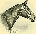The Horse - its treatment in health and disease, with a complete guide to breeding, training and management (1905) (14763786372).jpg