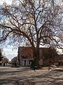 The Plane tree in the Main street - panoramio.jpg