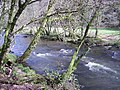 The River Barle from the west bank. - geograph.org.uk - 748653.jpg