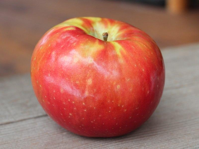 The SugarBee Apple now grown in Washington State.jpg