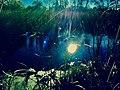 The mermaid meadow.jpg