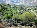 The nature of FASA -29-02-1391 - panoramio (1).jpg