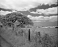 The old oak tree (49913844047).jpg