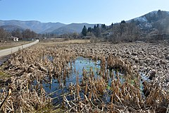 The swamp of Muhalnitsa, Botevgrad, Bulgaria (19.02.2019).jpg