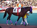 Tokyo Daishoten Day at Oi racecourse (31945230896).jpg