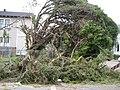 Tornado13Feb07CarrolltonKnockedTrees.jpg