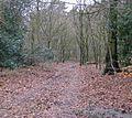 Track through plantation - geograph.org.uk - 1728451.jpg
