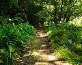 Trail to Aihualama Falls (5170646169).jpg