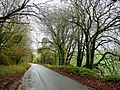 Tree-lined lane near Dean Prior - geograph.org.uk - 1605995.jpg