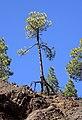 Tree (5488841235).jpg