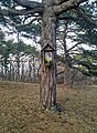 Tree shrine in Perchtoldsdorf, Lower Austria, Austria PNr°0470.jpg
