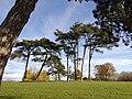 Trees in Fairwater Park - geograph.org.uk - 1050207.jpg