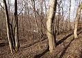 Trees in Tourula.jpg