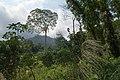 Tropical rainforest 2, Koh Chang, Thailand.jpg