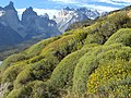 Typical Xerophytic Community in Torres del Paine (3279596074).jpg