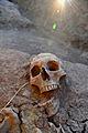 Ulpiana skeleti 3.jpg