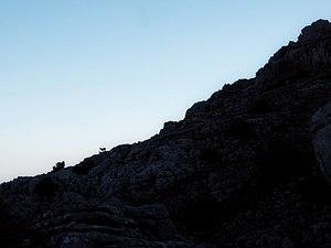 Una oveja contra el suelo en el paraje nacional el Torcal de Antequera.jpg