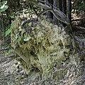Upturned tree root wad 2 NBG LR.jpg