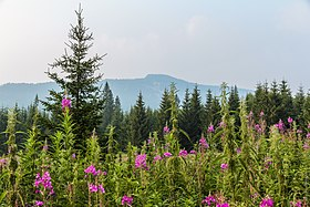 Ural Mountains - Wikipedia