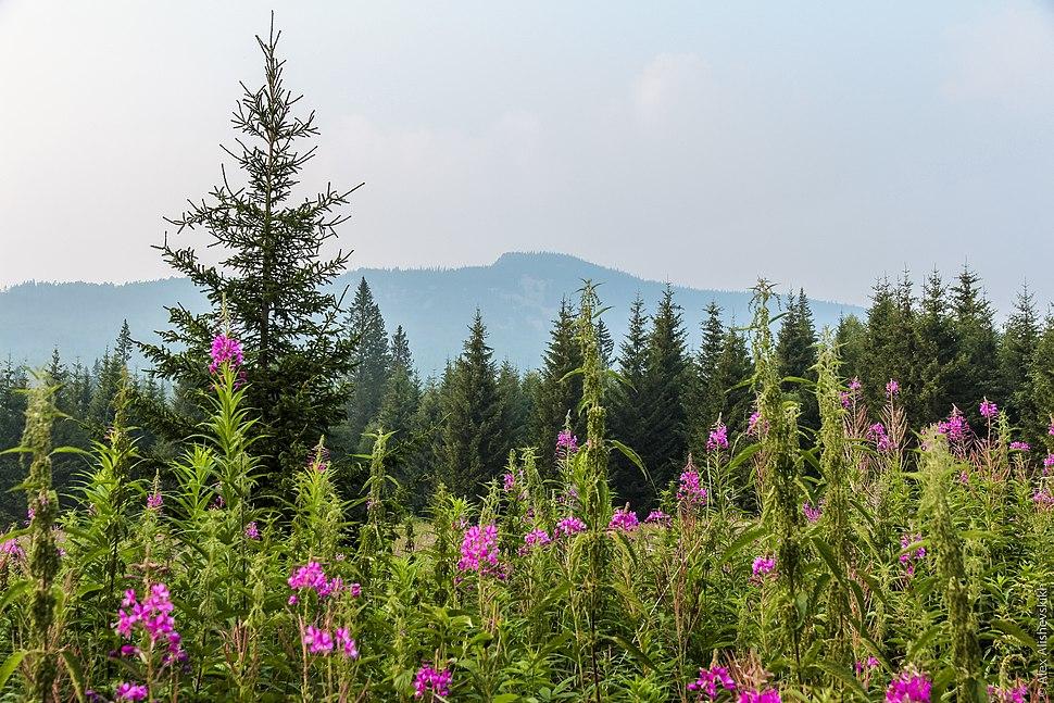 Ural Mountains IMG 3277 (28448487562)
