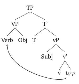 Verb-initial word order - VP movement to derive VOS word order.