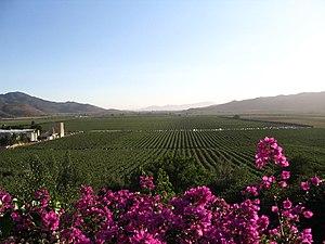 Valle de Guadalupe - Valle de Guadalupe
