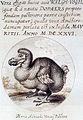 Van den Venne dodo.jpg