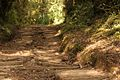 Vegetacion de Bosque Tropical en Costa Rica 031.jpg