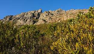View up slopes of Table Mountain to summit.jpg