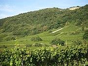 Vineyards Schriesheim.jpg