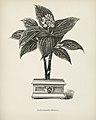 Vintage illustrations by Benjamin Fawcett for Shirley Hibberd digitally enhanced by rawpixel 101.jpg