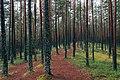 Viru raba matkarada, Estonia (Unsplash).jpg