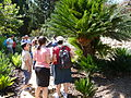 Visitors in NPG's Plant Evolution Garden, HUJI's Edmund J Safra campus.jpg