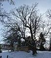 Vranov u Brna, chráněný strom (1).JPG
