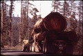 WITHIN A MILE OF MAGNIFICENT REDWOODS ARE SITES OF SOME OF THE WORST LOGGING AND CLEAR CUTTING - NARA - 542855.tif