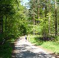 Waldweg - panoramio (4).jpg