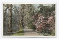 Walk along the Lake, Magnolia on the Ashley, Charleston, S. C (NYPL b12647398-73893).tiff