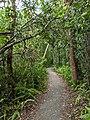 Walkway at Fairchild Tropical Botanical Gardens.jpg